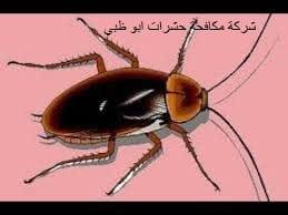 شركة مكافحة حشرات ابو ظبى