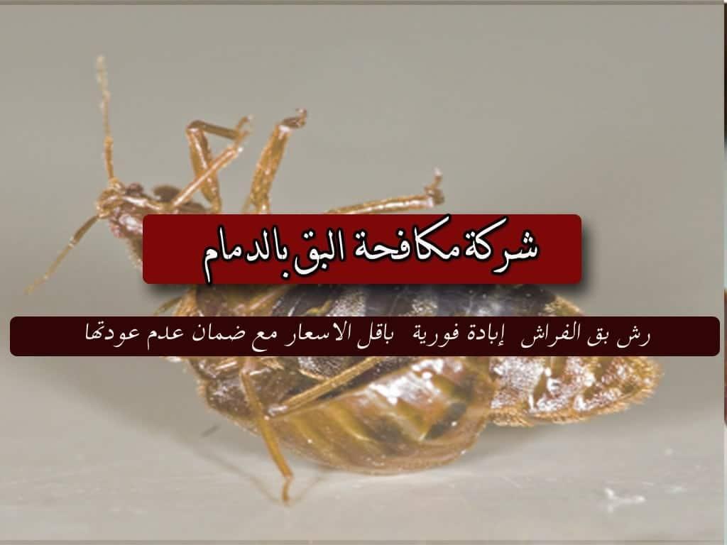 شركة مكافحة حشرات و رش مبيدات بالدمام